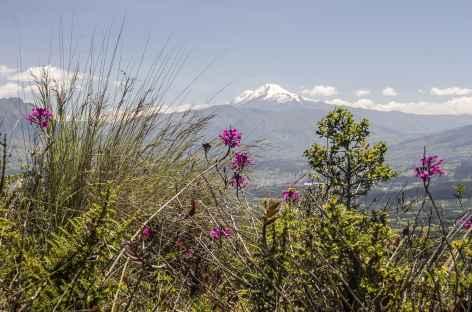Orchidées et volcan Cayambe depuis la lagune Cuicocha - Equateur -