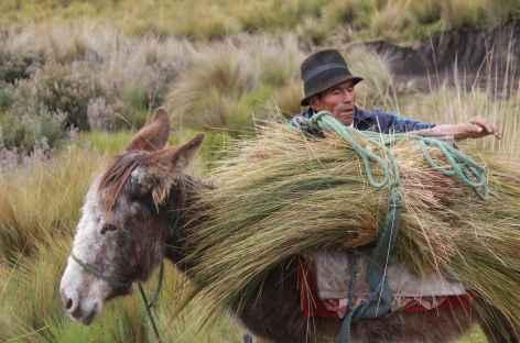 Récolte de l'ichu, la paille andine - Equateur -
