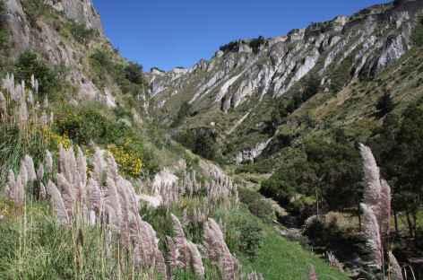 Au fond du canyon du rio Toachi - Equateur -