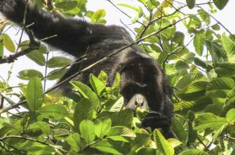 Un singe nous observe - Mexique -