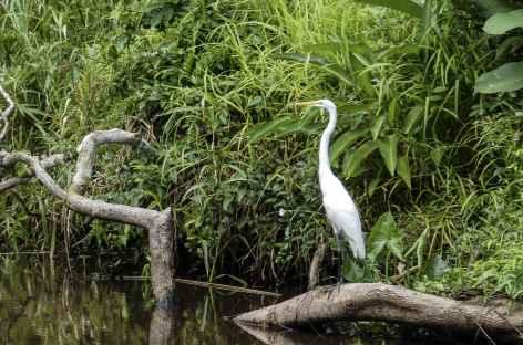 Une aigrette - Nicaragua -