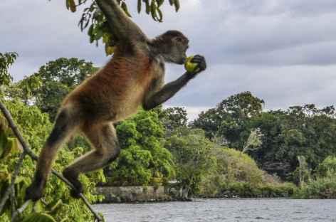 Un singe nous observe sur les  -