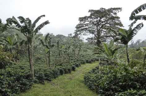 Balade sur les sentiers de la Finca El Jaguar - Nicaragua -