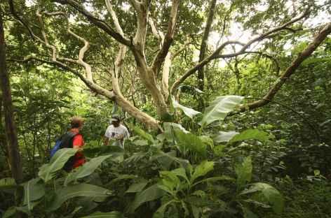 Randonnée sur les flancs du volcan Mombacho - Nicaragua -