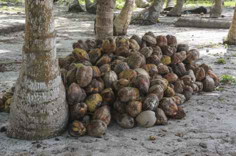 La richesse des îles San Blas, la noix de coco ! - Panama -
