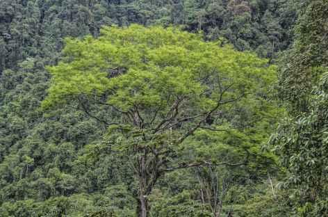 Beauté des arbres dans le parc du volcan Baru - Panama -