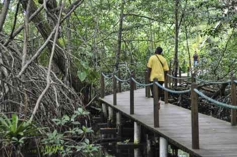 Archipel Bocas del Toro, balade sur l'île de Bastimentos - Panama -