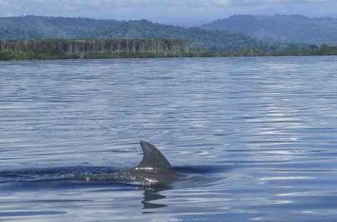 Rencontre avec un dauphin dans le parc national Bastimentos - Panama -