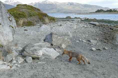 Croisière en Patagonie, Anse Almirantazgo et glacier Marinelli -
