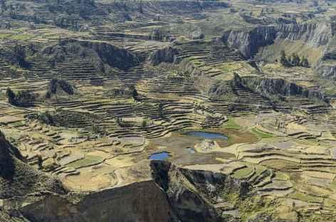 Les champs en terrasses dans le canyon de Colca - Pérou -