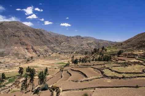 Cultures en terrasse dans le canyon de Colca - Pérou -