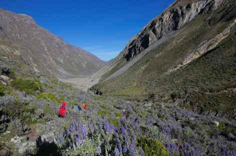 Descente vers Huayllapa - Pérou -