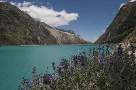 Lupins et la laguna Paron - Pérou -