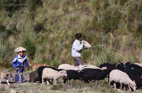 Jeunes bergers dans la cordillère - Pérou -