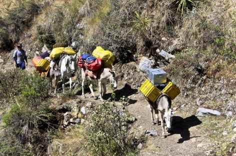 Notre fidèle caravane ! - Pérou -