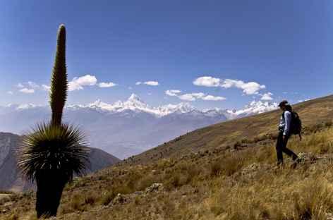 Découverte de l'étonnante Puya Raimondi dans la Cordillère Noire - Pérou -