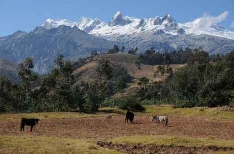 Marche au cœur des vallées agricoles de Honda et Vicos - Pérou -