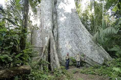 Un géant d'Amazonie - Pérou -
