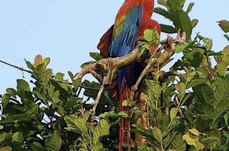 Observation animalière en Amazonie - Pérou -