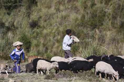 Rencontre avec des bergers dans la vallée d'Ingenio -