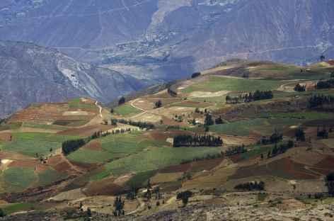 La campagne cultivée du callejon de Huaylllas - Pérou -