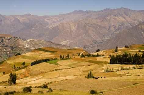 Marche entre Cashapampa et Hualcayan -