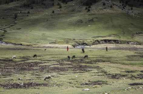 Rencontre dans la vallée d'Ingenio -