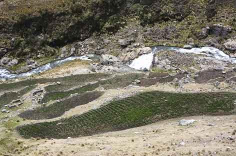 Cultures en terrasses près de Ruina Pampa -