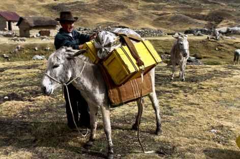 Chargement des bagages avant une nouvelle journée dans la Cordillère Huayhuash - Pérou -