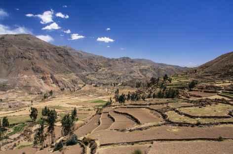 Les terrasses cultivées dans le canyon de Colca - Pérou -