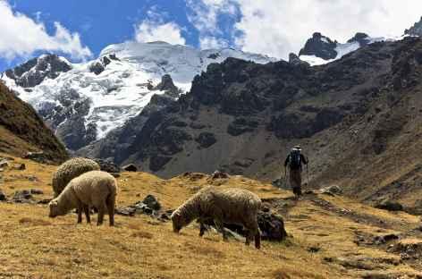 Montée face au Diablo Mudo - Cordillère Huayhuash - Pérou -
