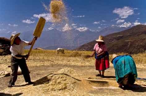 Activité agricole dans la Cordillère Noire - Pérou -
