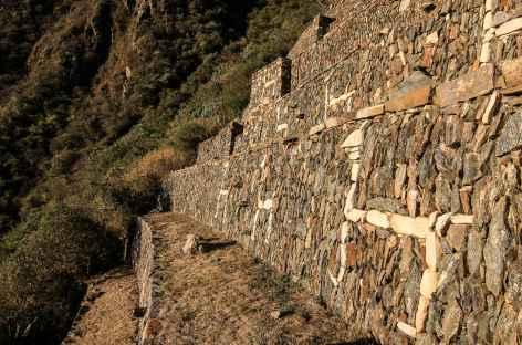 Les fameuses terrasses avec des lamas blancs de Choquequirao - Pérou -