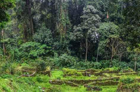 Le site d'Espiritu Pampa - Pérou -