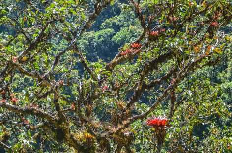Dans la forêt tropicale - Pérou -