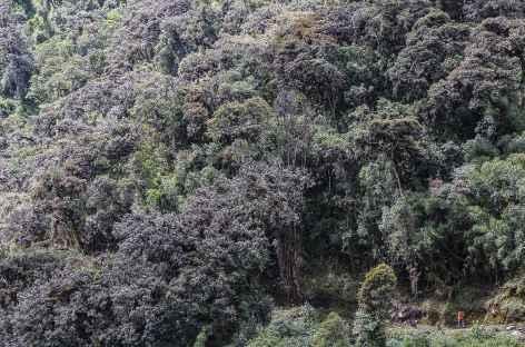 Dans la vallée de Yanatile - Pérou -
