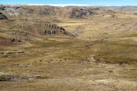 Entre Phinaya et la lagune Ccascana - Pérou -