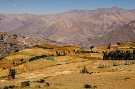 Cultures et Cordillère Noire à l'approche de Cashapampa - Pérou -