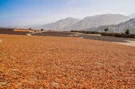 Sèchage des poivrons sur la route entre Lima et Carhuaz - Pérou -