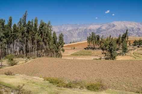 Cultures à l'approche de Cashapampa - Pérou -