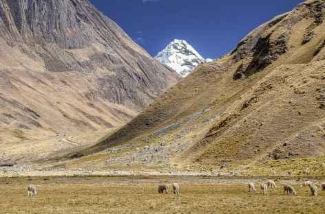 Vue sur l'Alpamayo depuis Safuna - Pérou -