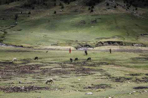 Bergère près de la lagune Huecrucocha - Pérou -