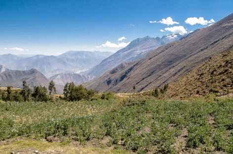 Cultures de fêves entre Ichic Ulta et Colcabamba - Pérou -