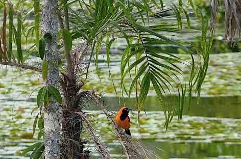 Extension Amazonie Pérou -