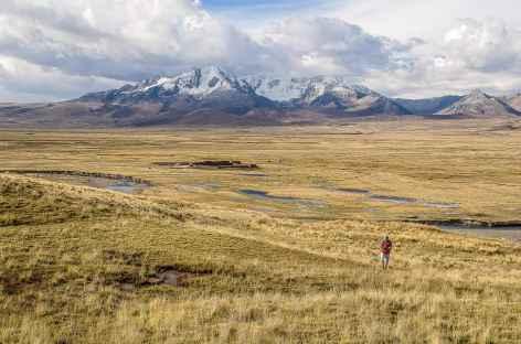 Quelques pas sur le plateau Conococha - Pérou -