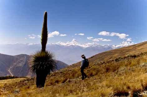 Approche des puyas Raimondi - Pérou -