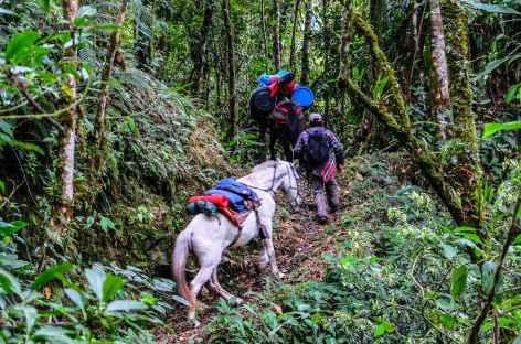 La végétation devient tropicale vers Concevidayoc - Pérou -