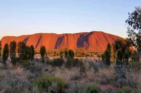 Ulura au petit matin - Australie -