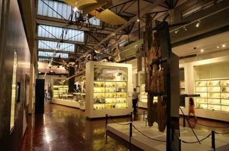 Queen Victoria Museum de Launceston -