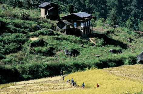 Cultures près de Rangjung - Bhoutan -